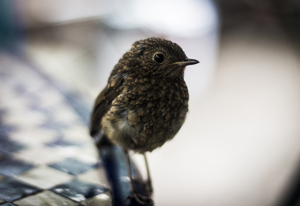 close up of a small fearless bird at a cafe in Bristol