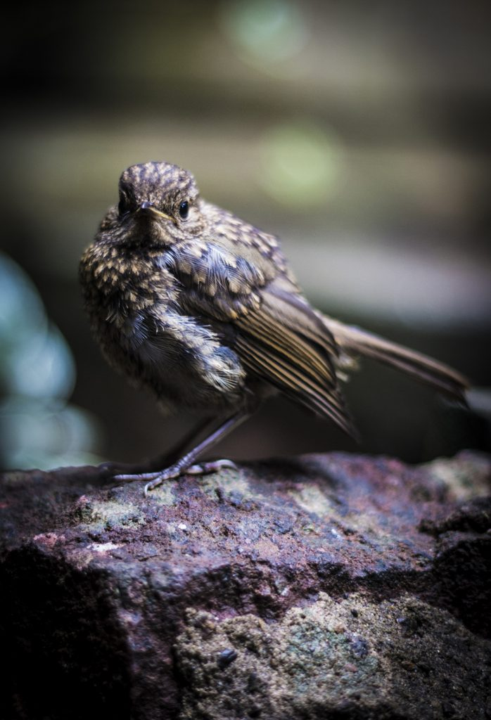 A small bird in a café garden in Bristol